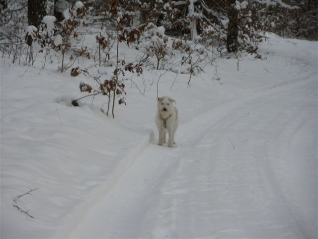 hund handwurzelballen verletzt
