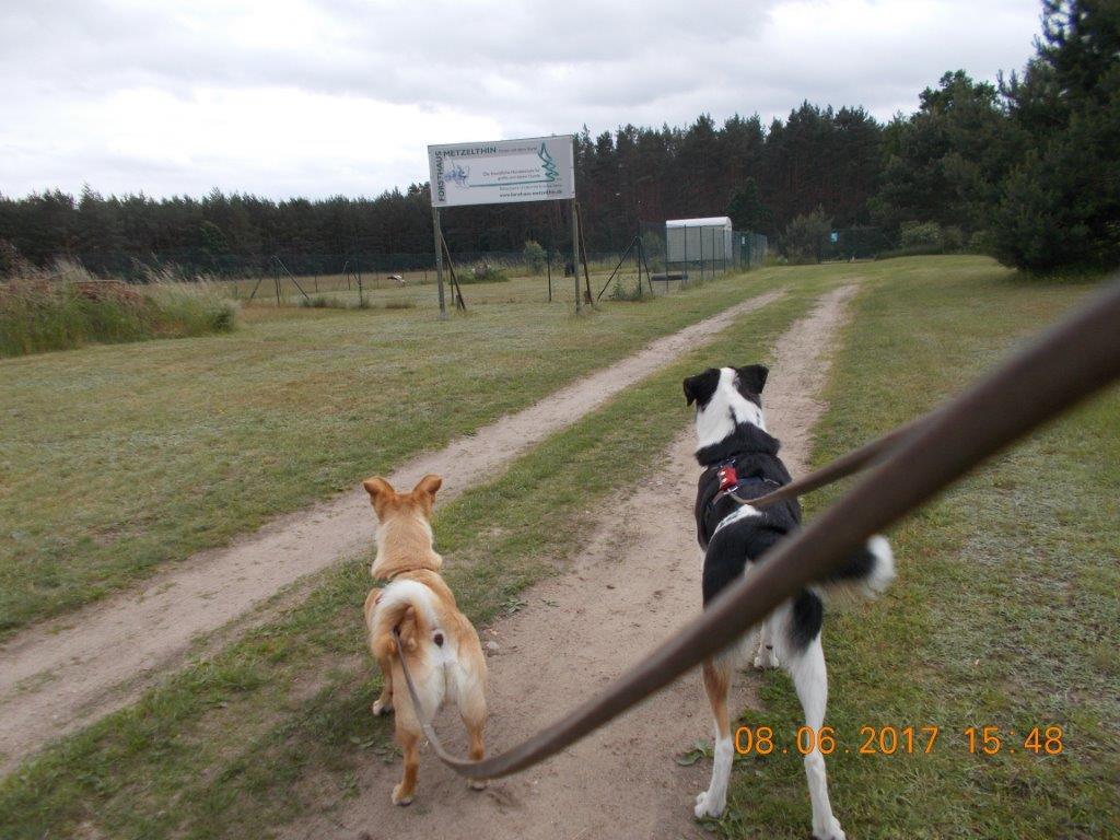 mein hund springt jeden an